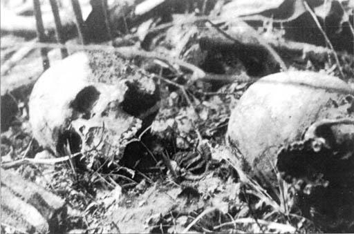 Milno. Czaszki ofiar zamordowanych przez ludobójców z OUN-UPA 11.11.1944 r.